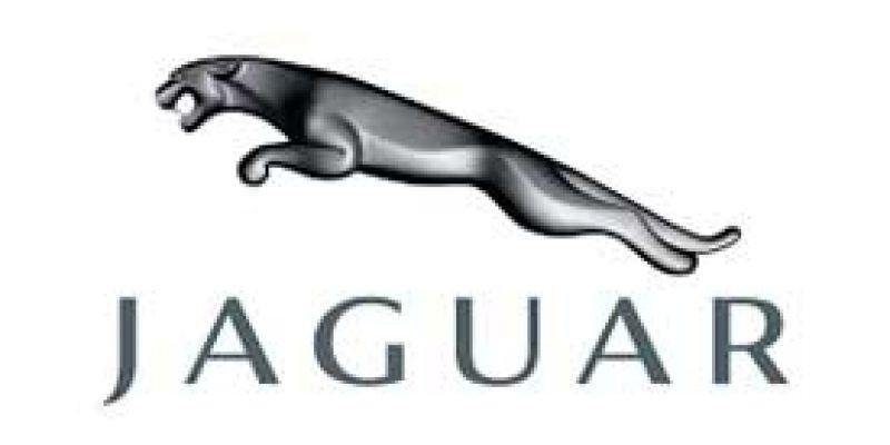 jaguar43627820-A792-F38F-3DC2-70F670D4889C.jpg
